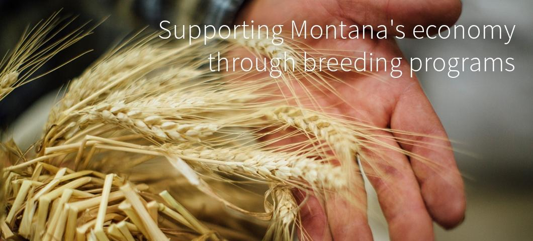 Supporting Montana's economy through breeding programs