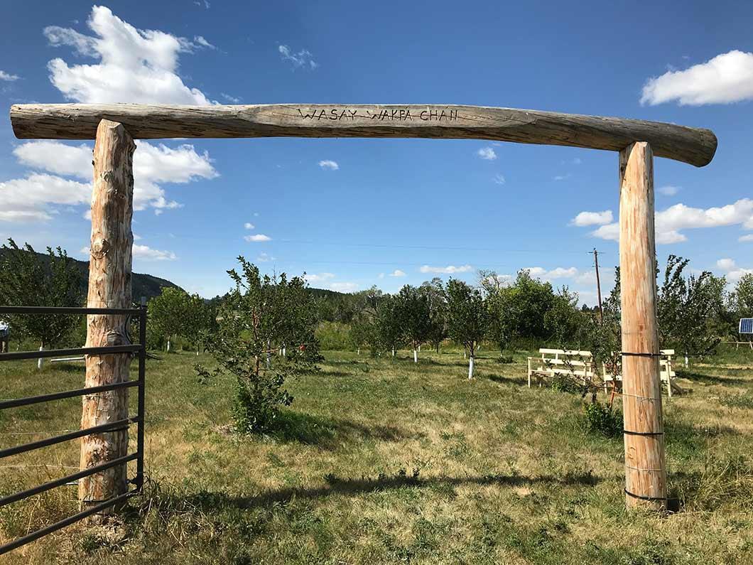 Wasay Wakpa orchard, Lodge Pole, MT